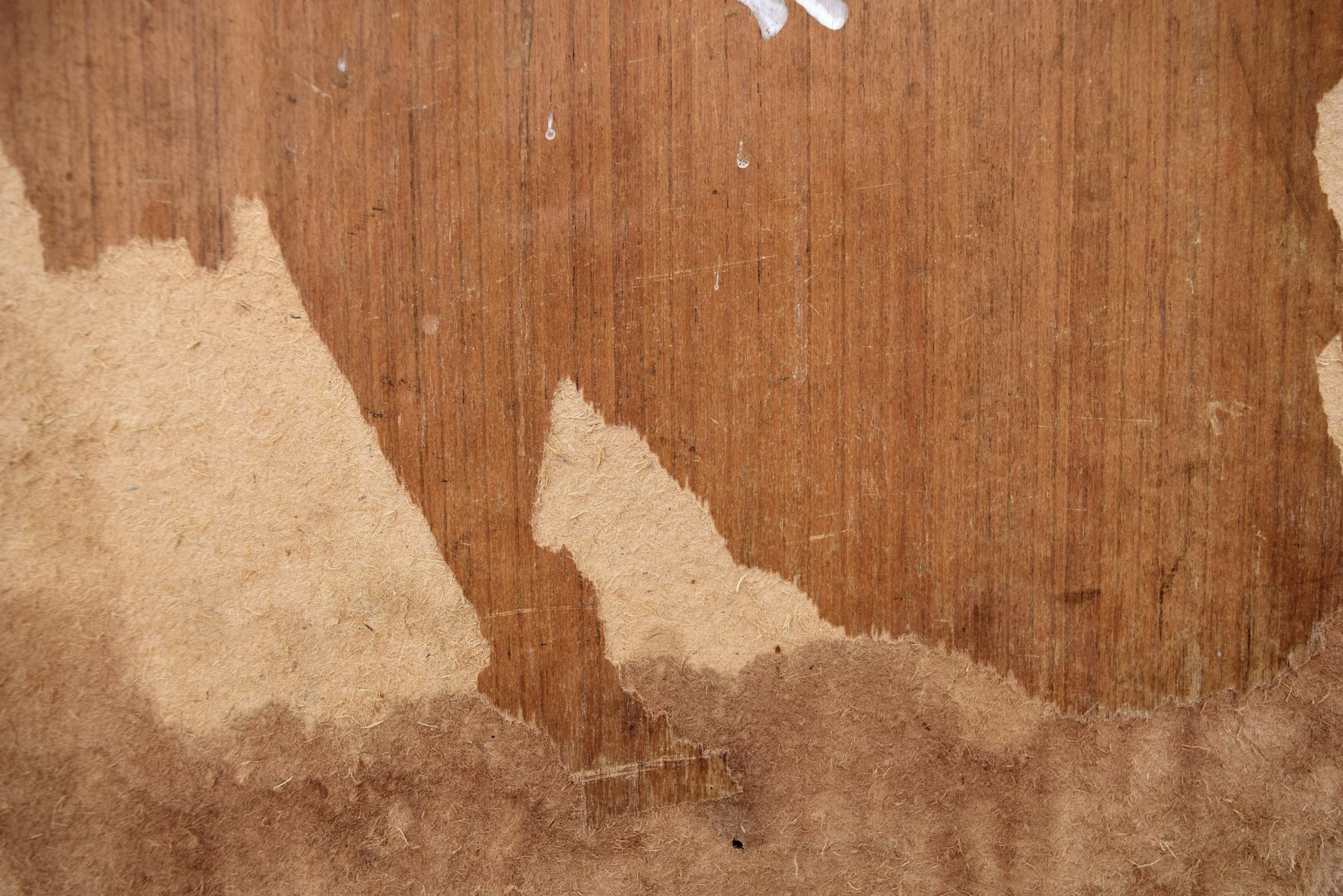 plywood decay 1